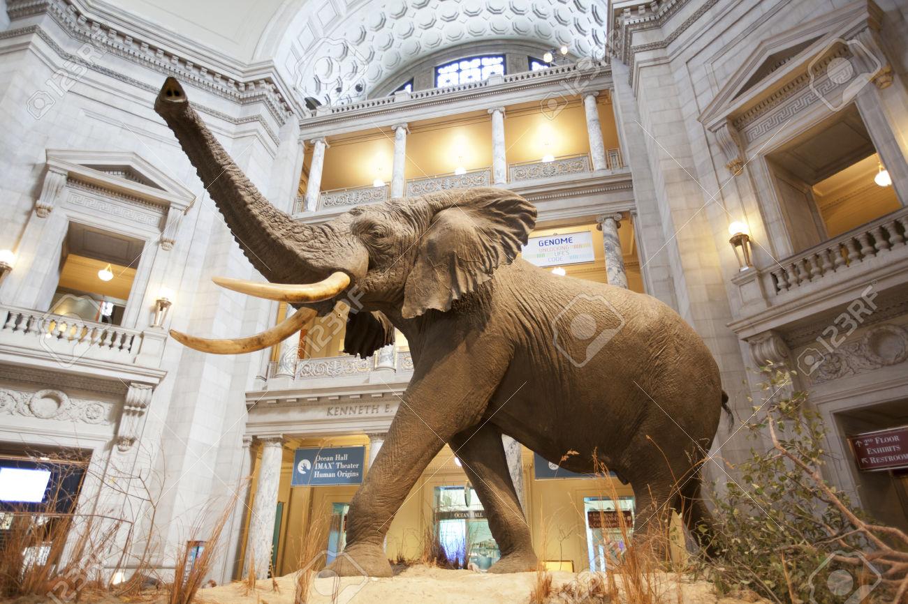 Interpol y aquella visita al museo: Mammoth