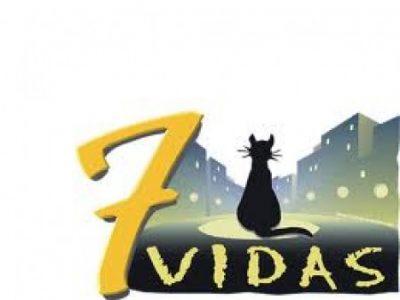 Las-siete-vidas-del-gato-e1323254094946